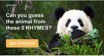 Quiz Test: Can You Guess The Animal From These Five Rhymes?