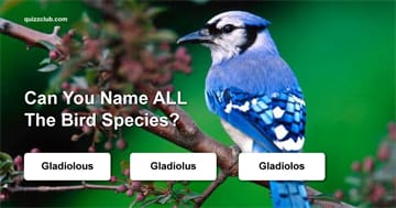Nature Quiz Test: Can You Name ALL The Bird Species?