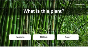 Nature Quiz Test: Can You Name These 25 Plants Every Adult Should Know?