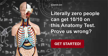 Science Quiz Test: Literally Zero People Can Get 10/10 On This Anatomy Test. Prove Us Wrong?