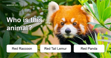 Quiz Test: Only 1 In 45 Adults Can Still Name All These Common Animals - Can You?
