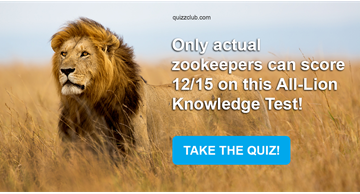Quiz Test: Only Actual Zookeepers Can Score 12/15 On This All-Lion Knowledge Test!