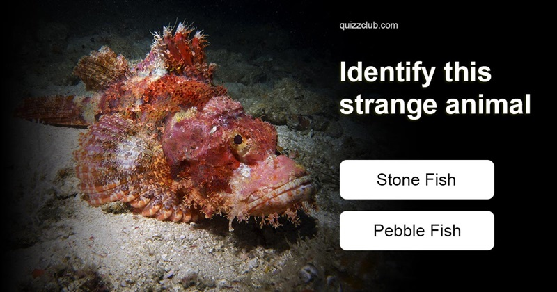 Quiz Test: Can you identify these strange animals?