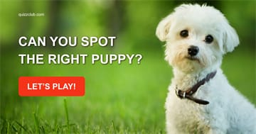 animals Quiz Test: Can You Spot The Right Puppy?