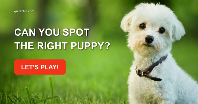 Quiz Test: Can You Spot The Right Puppy?