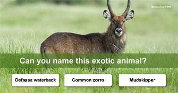 animals Quiz Test: How Many Of These Exotic Animals Can You Name?
