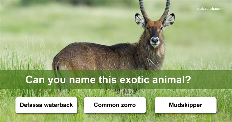 Quiz Test: How Many Of These Exotic Animals Can You Name?