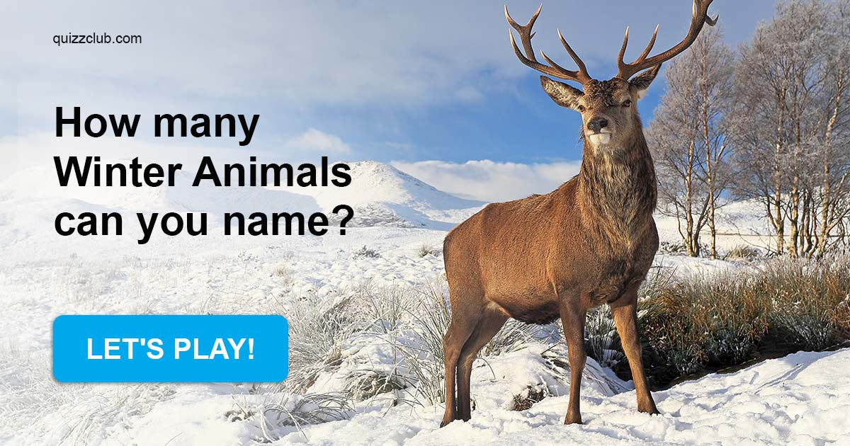 How Many Winter Animals Can You Name? | Trivia Quiz | QuizzClub