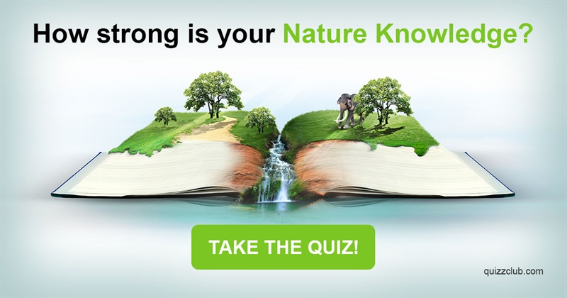 Nature Quiz Test: How Strong Is Your Nature Knowledge?