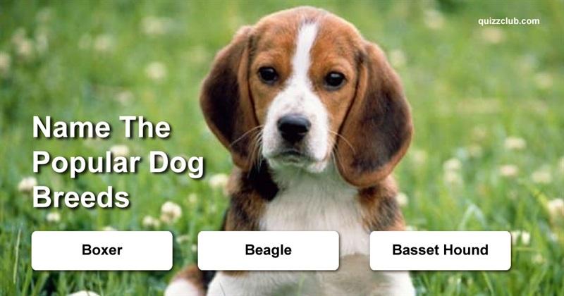 Quiz Test: Name The Popular Dog Breeds