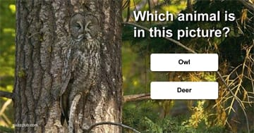animals Quiz Test: Can You Find The Animals?