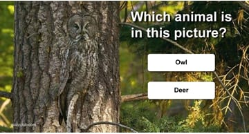 Quiz Test: Can You Find The Animals?