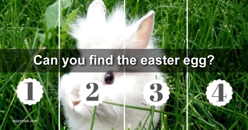 Quiz Test: Can You Find The Easter Egg We've Hidden In Each Of These Photos Of Adorable Bunnies?