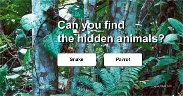 Quiz Test: Can you find the hidden animals?