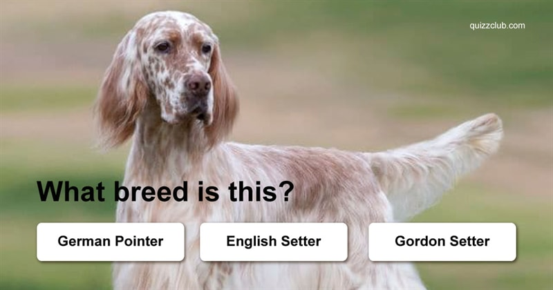 Quiz Test: Can You Guess These Challenging Dog Breeds?