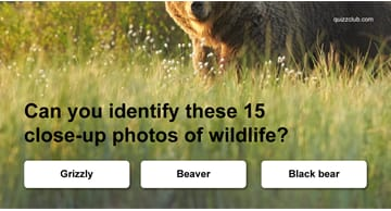 animals Quiz Test: Can You Identify These 15 Close-up Photos of Wildlife?