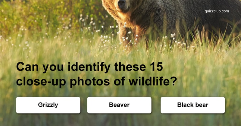 Quiz Test: Can You Identify These 15 Close-up Photos of Wildlife?