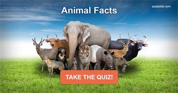 Quiz Test: Do You Know These Animal Facts?