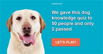 Quiz Test: We Gave This Dog Knowledge Quiz To 50 People And Only 2 Passed
