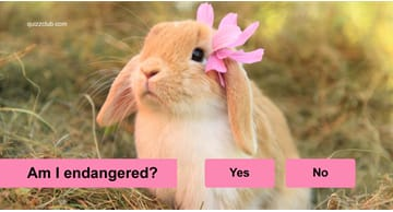 animals Quiz Test: Are These Incredibly Adorable Animals Endangered?