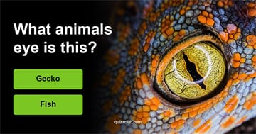 animals Quiz Test: Can You Guess The Correct Animal?