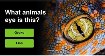 Quiz Test: Can You Guess The Correct Animal?