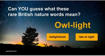 Nature Quiz Test: Can YOU guess what these rare British nature words mean?