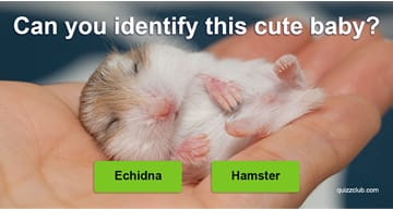 Quiz Test: Can You Identify 27 Of The World's Cutest Animals As Babies?