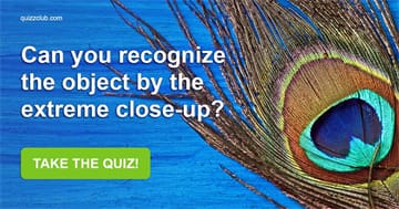 vision Quiz Test: Can You Recognize The Object By The Extreme Close-Up?
