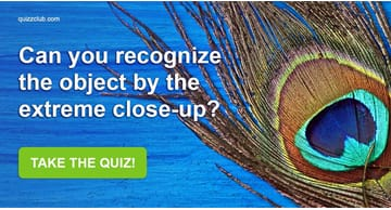Quiz Test: Can You Recognize The Object By The Extreme Close-Up?