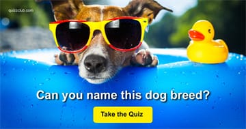 Quiz Test: Name The Popular Dog Breeds