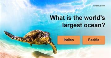 Quiz Test: Random Trivia Quiz!