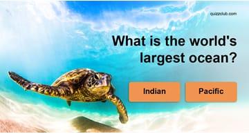 IQ Quiz Test: Random Trivia Quiz!