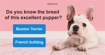 Quiz Test: Think You Know Puppies? Just Try Naming 10/12 Breeds!
