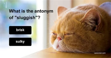 language Quiz Test: This Antonym Test Was Designed For SAT Experts