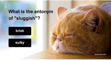 Quiz Test: This Antonym Test Was Designed For SAT Experts