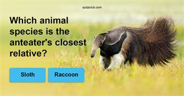 Nature Quiz Test: Can You Match The Animal With Its Closest Relative?