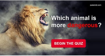 animals Quiz Test: Can You Tell Us Which Animal Is More Dangerous?