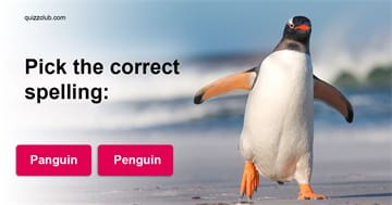 language Quiz Test: Can You Spell The Hardest Words In The English Language?