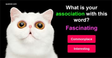 knowledge Quiz Test: Only PhDs Can Pass This Word Association Quiz