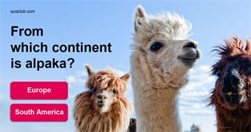 Geography Quiz Test: Which Continent Are These Wild Animals From?
