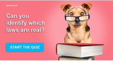 knowledge Quiz Test: Can you identify which laws are real?