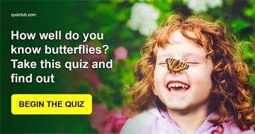 animals Quiz Test: How well do you know butterflies? Take this quiz and find out