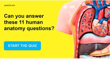Science Quiz Test: Your IQ Is Higher Than 149 If You Can Answer These Human Anatomy Questions