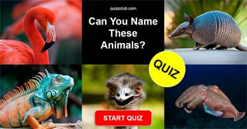 Nature Quiz Test: Can You Name These Animals?
