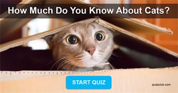 animals Quiz Test: Test Your Knowledge On Cats!