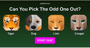 IQ Quiz Test: Can You Pass This 10-Question IQ Test ?
