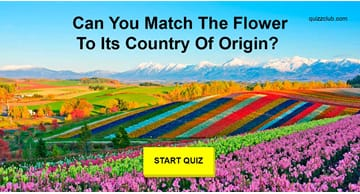 Nature Quiz Test: Can You Match The Flower To Its Country Of Origin?
