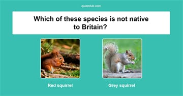 Nature Quiz Test: How well do you know Britain's wildlife?