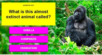 animals Quiz Test: Can You Name All These Amazing Yet Almost Extinct Animals?